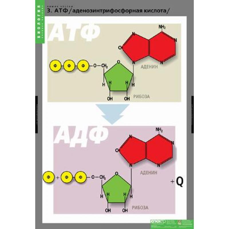 БИОЛОГИЯ   Химия клетки