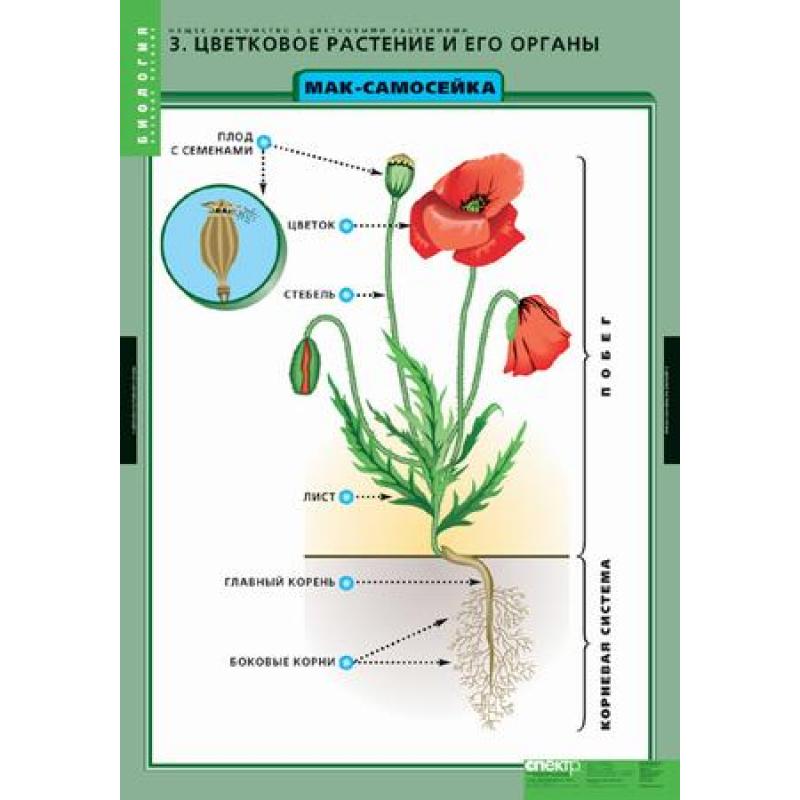 Растениями с общее знакомства