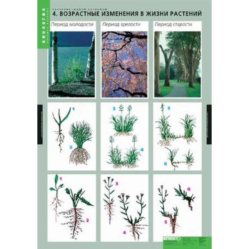 БИОЛОГИЯ  Растение - живой организм.