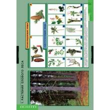 БИОЛОГИЯ  Растения и окружающая среда
