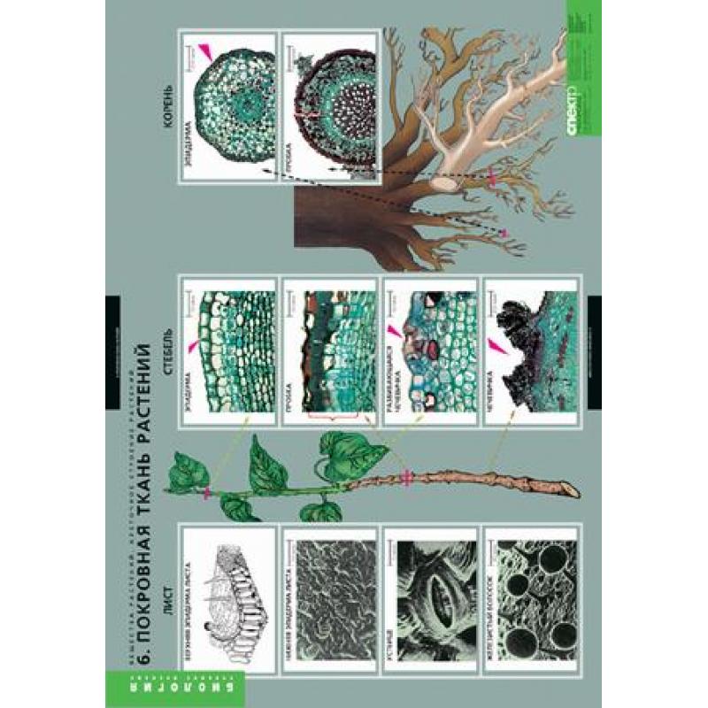 БИОЛОГИЯ  Вещества растений, клеточное строение.