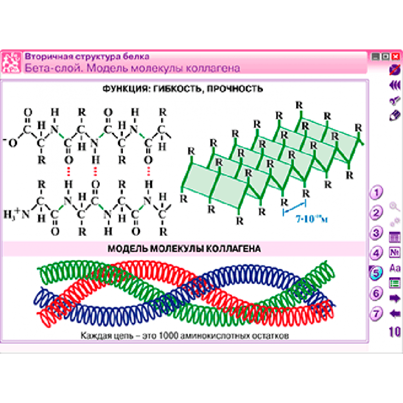 Наглядная химия. Органическая химия. Белки и нуклеиновые кислоты
