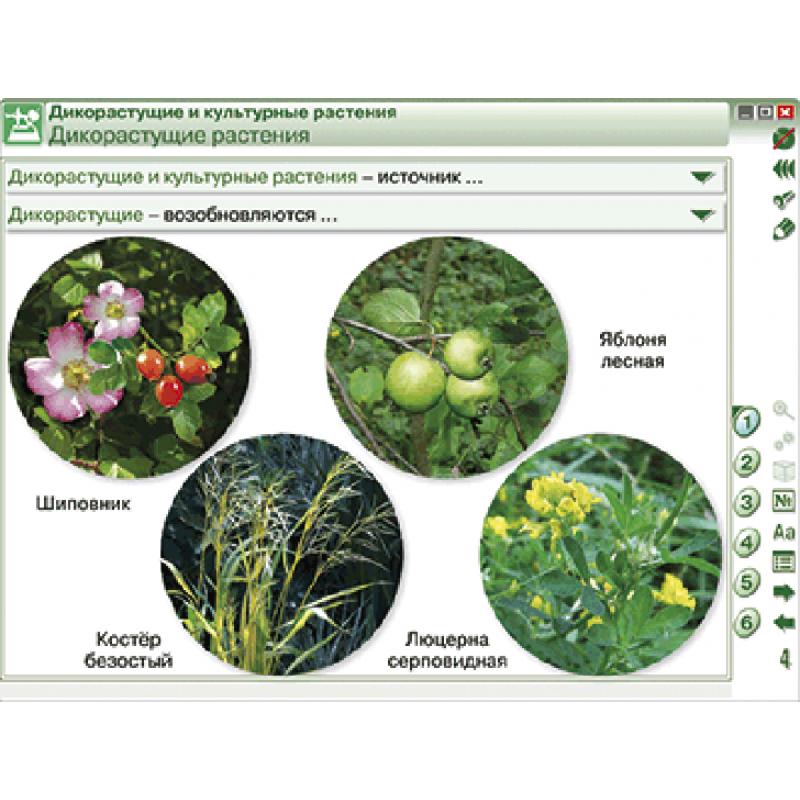 Наглядная биология. Растение - живой организм