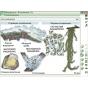 Наглядная биология. 6 класс. Растения. Грибы. Бактерии