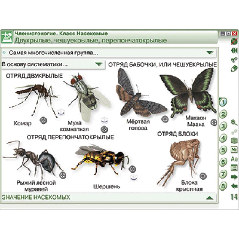 Наглядная биология. 7 класс. Животные