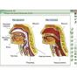 Наглядная биология. 8 - 9 классы. Человек. Строение тела человека