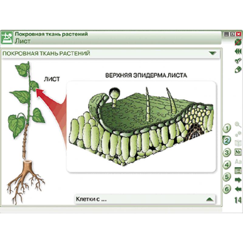 Наглядная биология. Химия клетки. Вещества, клетки и ткани растений